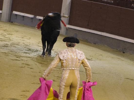 Photos of Bullfighting Museum (Museo Taurino), Madrid