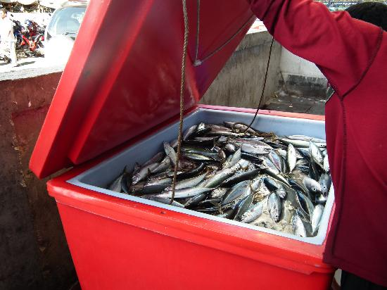 Today Catch Male Fish Market Todays Catch