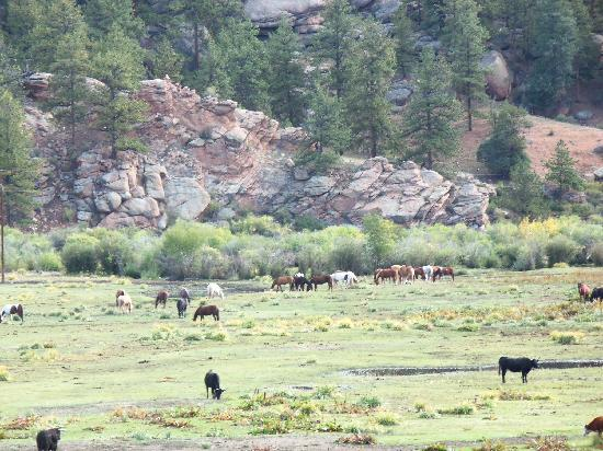 Tarryall River Ranch : Tarryall RR herd