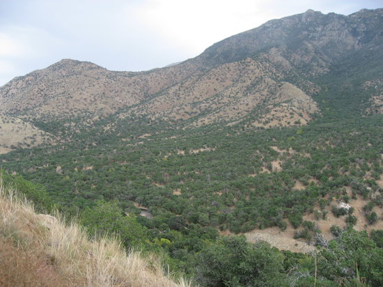 View From Nature Trail Jpg