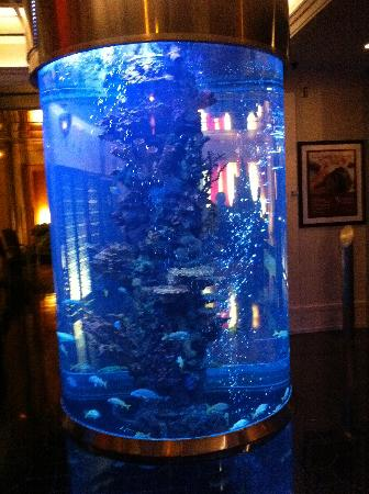 Pillar Fish Tank : Fish Tank Pillar in the lobby... - Picture of Dream Midtown, New York ...