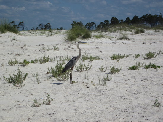 Saint George Island State Park: Keeping Watch