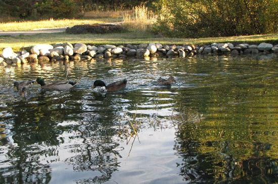 St. Bernard Lodge: Trout and Duck Pond on Property