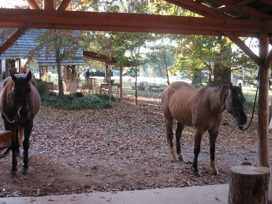Seventy-four Ranch: View from inside our Saddle Room