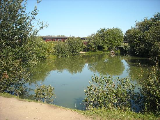 Lounge picture of shorefield country park milford on for Milford lake fishing report