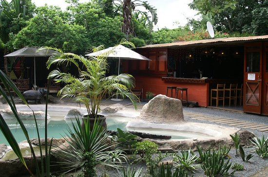 Wildebees Ecolodge: Bar/ Reception /Pool area