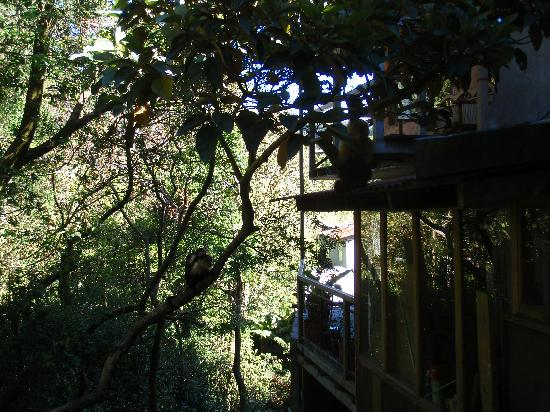 Manakin Lodge: View from the balcony