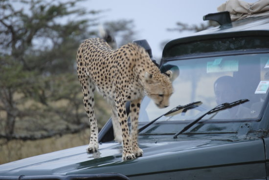 Cheetah Tented Camp