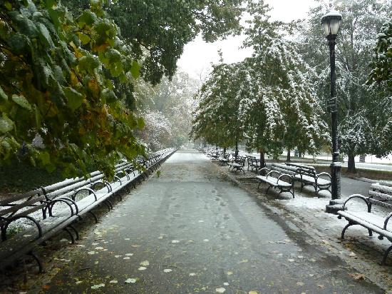 Riverside Park across street from Wyman House during Oct 29, 2011 snowstorm