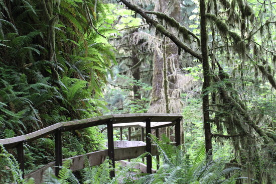 Lake Quinault Lodge: Trail in the rain forest