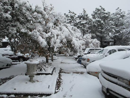 Rodeway Inn & Suites: parking lot is treed