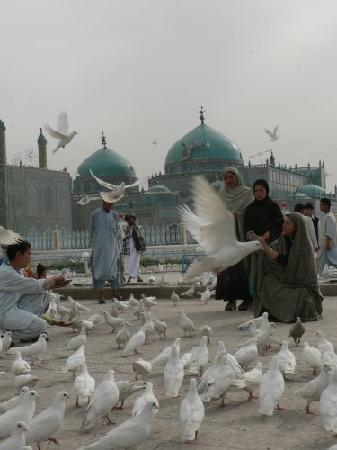Mazar-i-Sharif, Afghanistan: Hazrat Ali shrine(Blue Mosque), Mazar-e Sharif