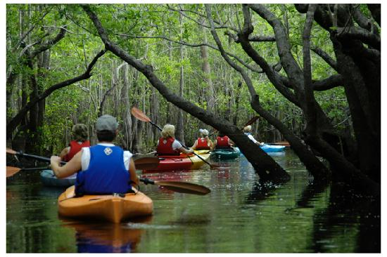 Tallahassee, Floride : Paddle down the Wakulla River with manatee.