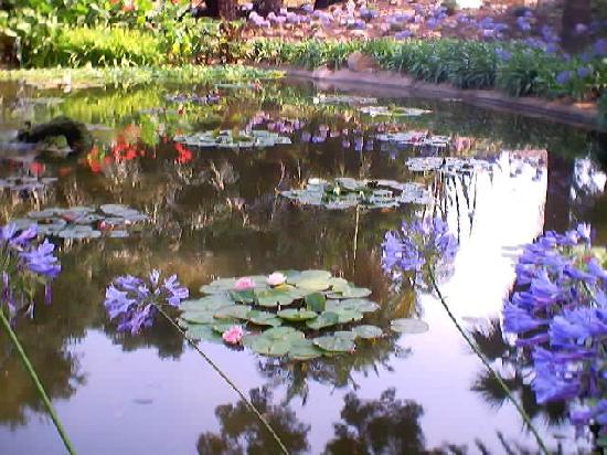 The Water Garden Picture Of Lotusland Santa Barbara