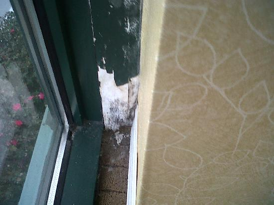 Hilton Lexington Suites: Mold and peeling paint on sill