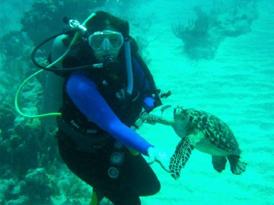 The Somerset on Grace Bay : A close encounter of the turtle kind off shore