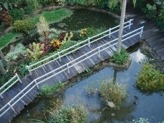Surfers Mayfair Hotel: Little garden with bridge downstairs of the hotel.