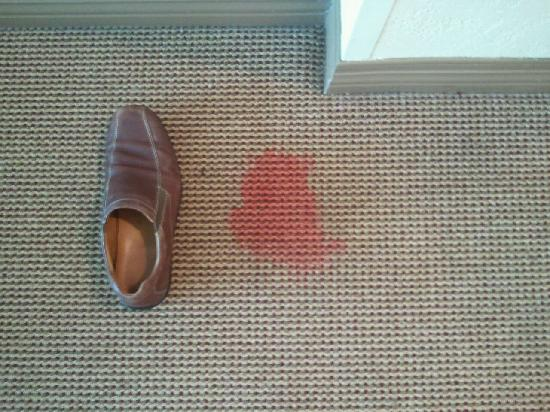 Sheraton Midwest City Hotel: Stain on carpet