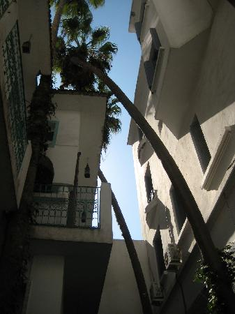 Hotel Transatlantique : ancient patio palm trees with collared doves and house buntings