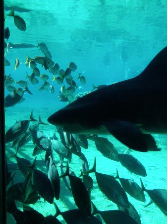 Pictures of Sea World - Attraction Photos