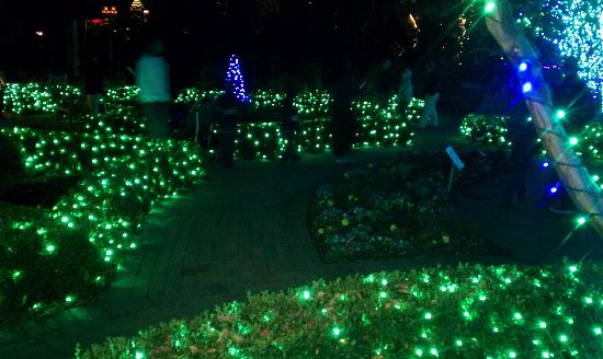 holiday garden lights green bushes picture of atlanta