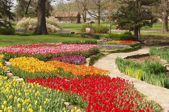 Spring blooms in Topeka during Tulip Time when thousands of tulips can be seen