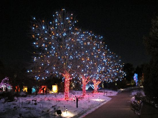 Blossoms Of Lights Picture Of Denver Botanic Gardens Denver Tripadvisor