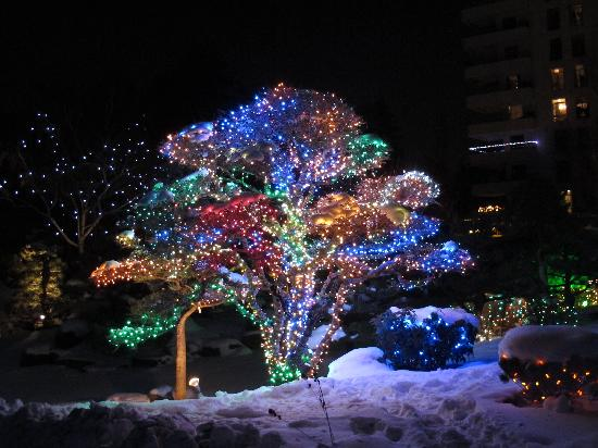 Blossoms Of Lights Bild Von Denver Botanic Gardens Denver Tripadvisor