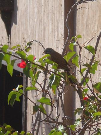 Riad Palmier: Blackbirds and finches singing in the morning sun