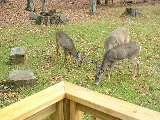 Davis, Virginia Occidental: deer outside the cabin