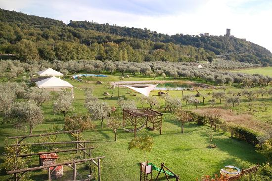 Iscairia Country House: Iscairia agriturismo: il grande giardino, ultiveto, con biolago fitodepurato