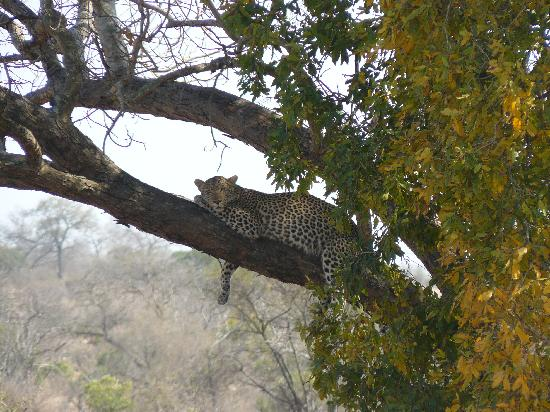 Jock Safari Lodge: Leopard