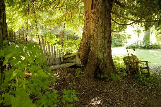 Green Cat Guest House and B&B: swing under the cedars