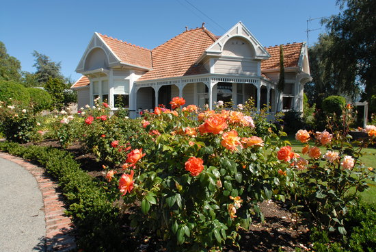 Anglesea House Bed & Breakfast: Anglesea house - oh the roses!