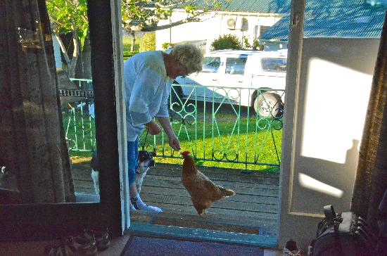 Waitomo Big Bird Bed & Breakfast: Henrietta and Tina stopped by