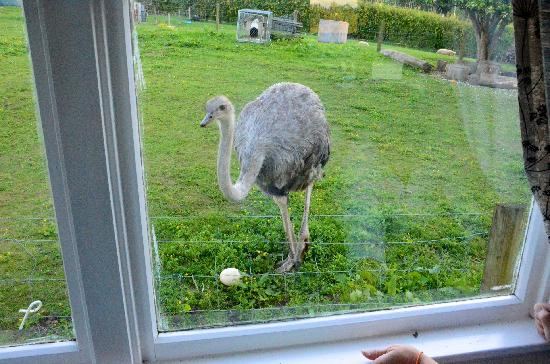 Waitomo Big Bird Bed & Breakfast: Victoria laid an egg!