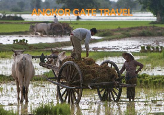 Angkor Gate Travel and Tours: Angkor Gate Travel-Cambodian Lifestyle