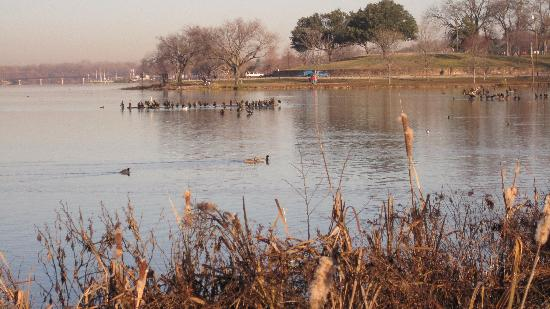 Photos of White Rock Lake Park, Dallas