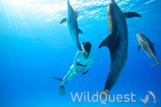 Photo of WildQuest Bimini