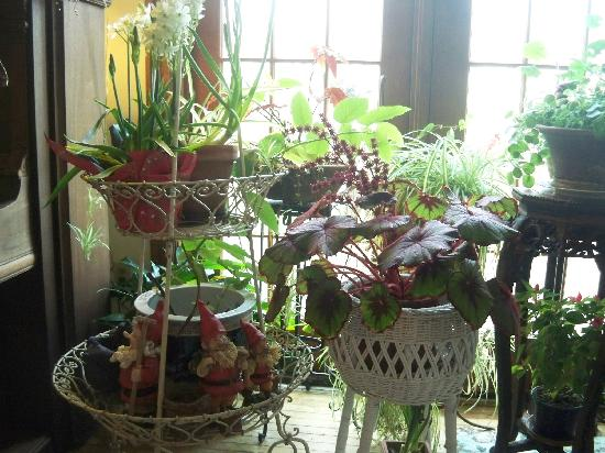Washington Irving Inn: The plants in the Breakfast dinning area