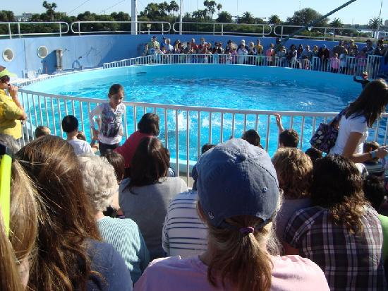 The Crowd Around The Dolphin Pool Picture Of Clearwater
