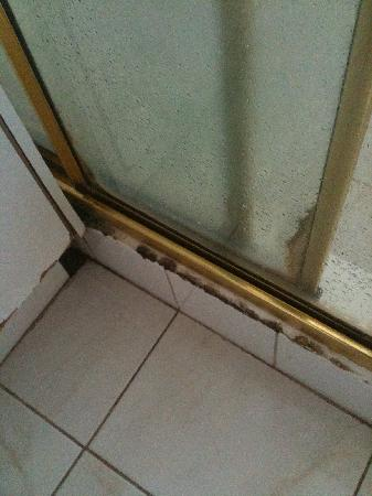 Darling Towers South Yarra: Mold in shower