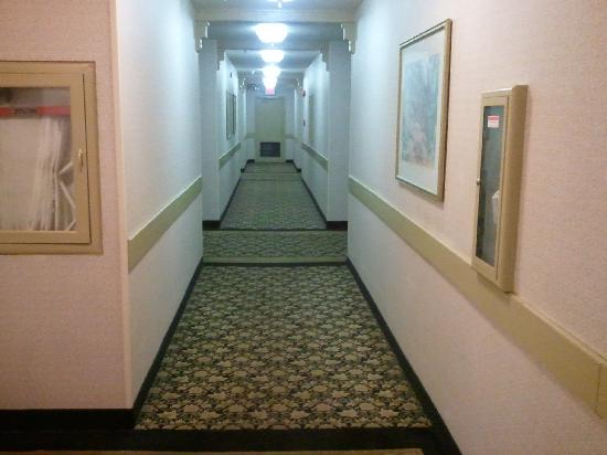 Ramada Plaza: Nasty dirty hallway