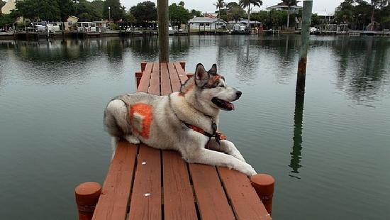 Bayview Plaza Waterfront Resort: Pet Friendly so we could take our boy