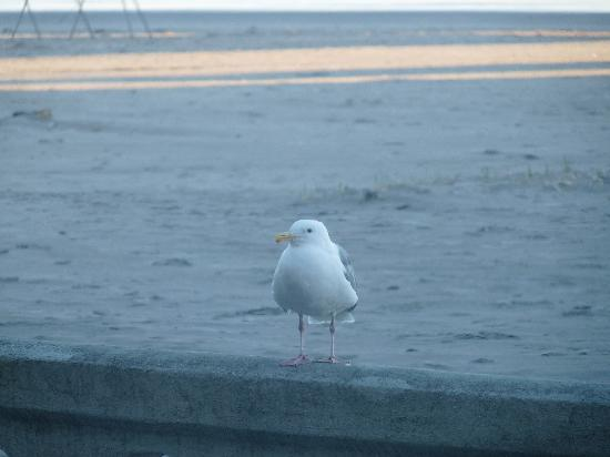 Ocean Front Motel: The (zoomed in) view of a seagull perched on the prom. I was sitting in a chair next to the wind
