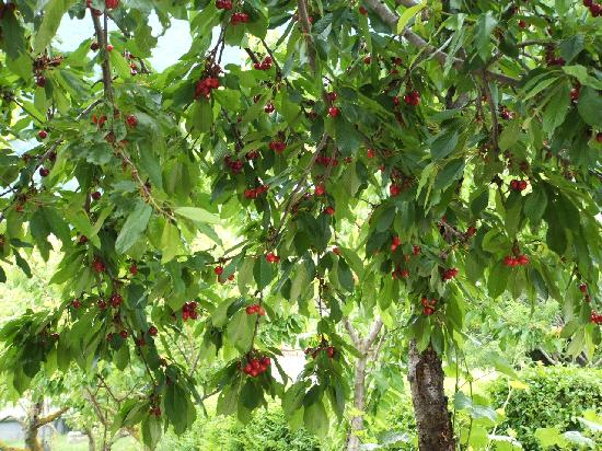 Our garden of multi fruit and nut trees organic il nostro - Alberi da giardino ...
