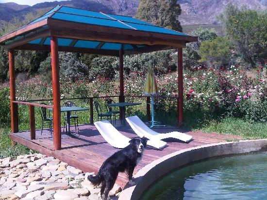 Keisie Cottages: Pool deck and Aqua the collie