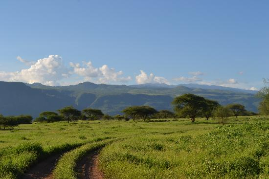 Lake Manyara National Park照片