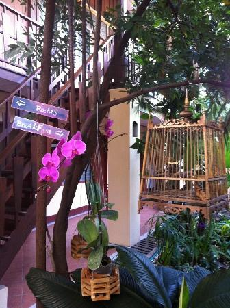 Cool Guesthouse: The Garden