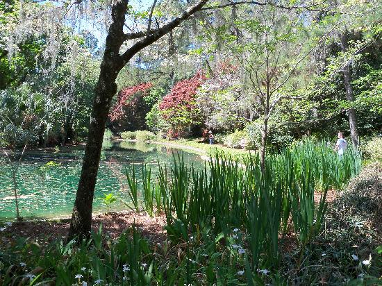 The Pond Picture Of Alfred B Maclay Gardens State Park